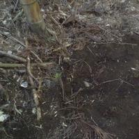 午後から竹の子山