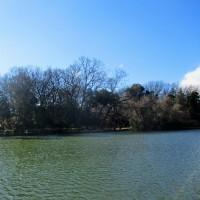 今日の日記、武蔵野台地の湧水で出来た善福寺池と富士見池の写真を撮って来ました