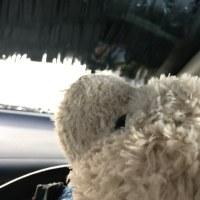 『京都に行こう』・・・クマクマ