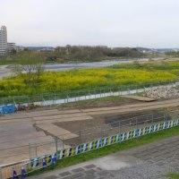 アユ釣りの名所は工事中…多摩川春景色シリーズ