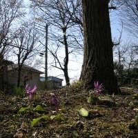 3月25日玉川上水に親しむ会-例会下見・日野の用水と湧水を見る2-A