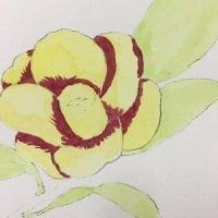 絵手紙教室『椿』を描く