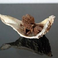 ブナの実の殻