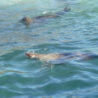 「東南アフリカ」編 アザラシの島・ドイカー島3