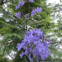 2017年6月青紫色