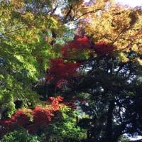 新宿御苑で紅葉狩り