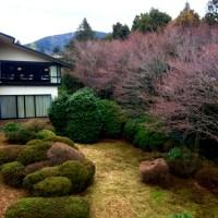 箱根は春の準備