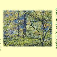 2016・12・02 広島:花鳥風月>今月も宜しく<六歌仙と我家の花壇の花の融合!