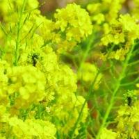 花の蜜 大津市