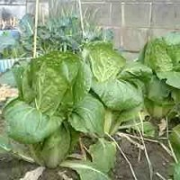 本日は184日目、「農業、食べ物」の日である。