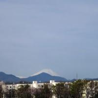 日野市ウォーキングG-4月12日は、「石神前駅~青梅へ」午前の部