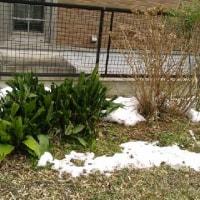 初雪から1週間経っても・・