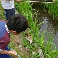昆虫公園のちひょうたん池
