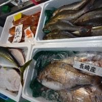 長崎からやってきたよ♪お魚界のプロ独身!長崎平政(ヒラマサ)ですッ!!刺身と手作り干物の専門店「発寒かねしげ鮮魚店」の魚屋シゲちゃん。