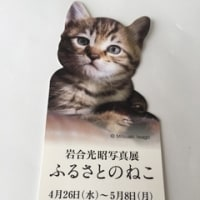 楽しみ〜♪ 岩合光昭写真展