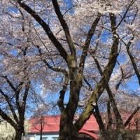 春のかをり