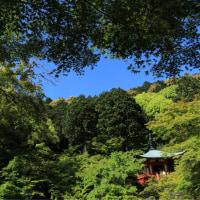 醍醐寺弁天堂の池の