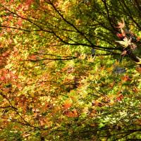 深耶馬渓の燃える紅葉からp3/3ラスト(D5500、18-140mm)