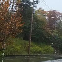 山中湖雨!富士山見えず。紅葉も少し早いかな。