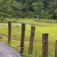 樫原湿原の看板植物、トキソウ他野草