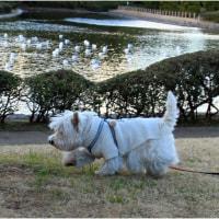 初春の公園散歩でエネルギー補給~