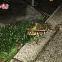 もう蛙が・・・