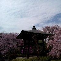 日々の当たり前に感謝して #花見#坐禅会201