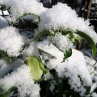 雪の日のセリバオーレン