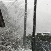 但東暮らし 113~雪がいっきにいっぱい降った~