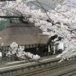 桜でにぎわう湯野上温泉駅