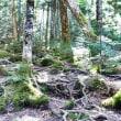 北八ヶ岳 苔の森