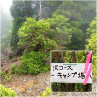 鉾岳 ツチビノキとササユリ