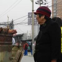 北京郊外にて~冬の始まり すべてが冬支度へ(1)・・・