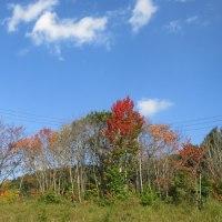 【写真】北信濃の紅葉