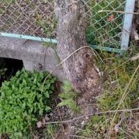 土地改良区『木曽川右岸用水送水』排泥弁開放