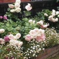 大きな薔薇の花束