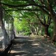 7/16(日)、河内長野RC定例会IN寺ケ池公園! その後プール!