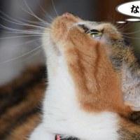 「武士」は日本人に対する呼称だろう