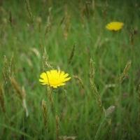 草のびのびと