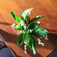 スタジオのお花たち♪