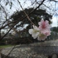 いまさらだけとシリーズ 10月8日 錦帯橋 岩国城