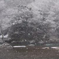 今年初釣りは雪模様