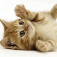 人生初、猫を飼ってみた感想