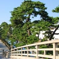 明日のイベント 「おくの細道・草加松原散策」を開催