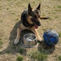 ルーちゃんとサッカーボール