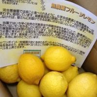 レモン仕込み