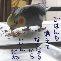 花火の日(5月28日)