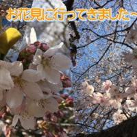 のあのお花見&お得なおしらせ☆