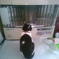 民泊後の猫