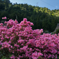 5月4日 春の美山